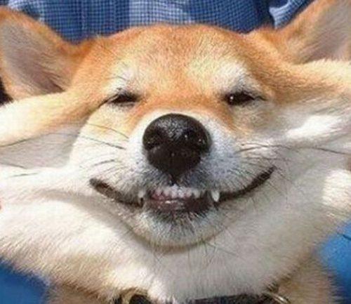 собака улыбка картинки7
