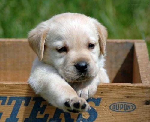 собака друг человека картинки4