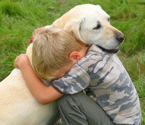 собака друг человека картинки13