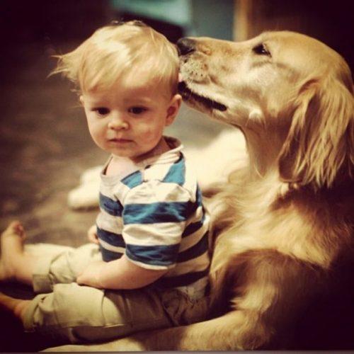 собака друг человека картинки14
