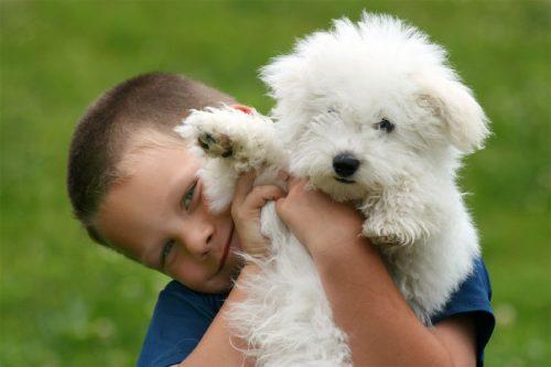 собака друг человека картинки15