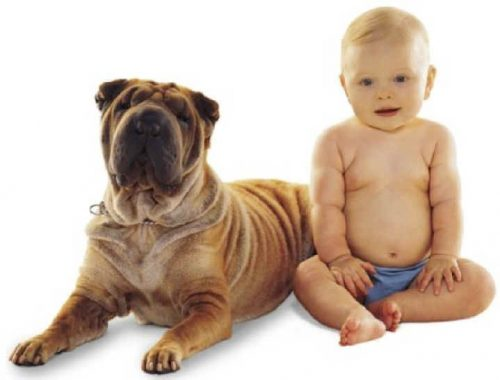 собака друг человека картинки3