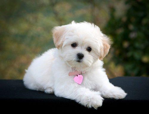 собака друг человека картинки5