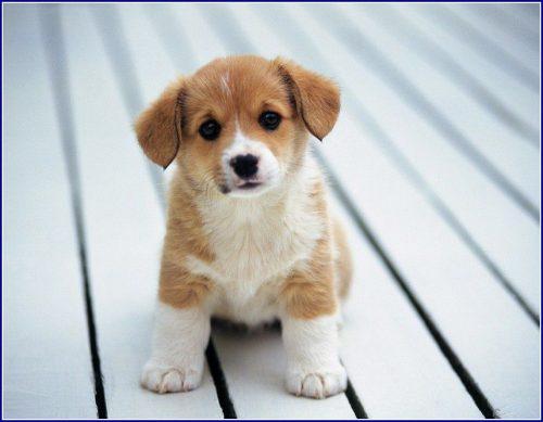 собака друг человека картинки8