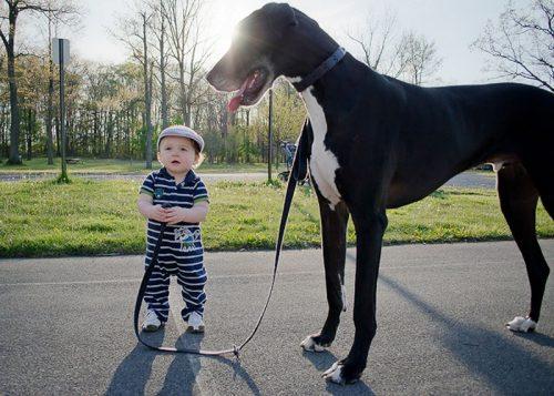 собака друг человека картинки11