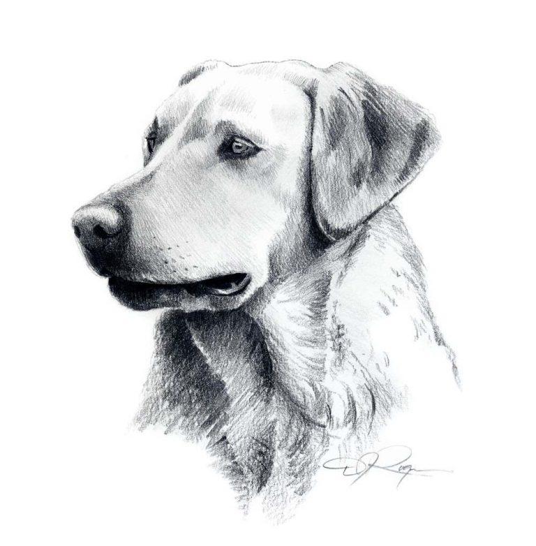 картинки собак чтобы нарисовать собаку того, созерцание зелёных