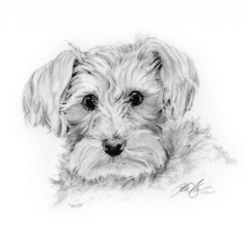 рисунок собаки карандашом10
