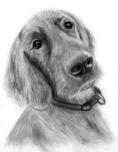 рисунок собаки карандашом2