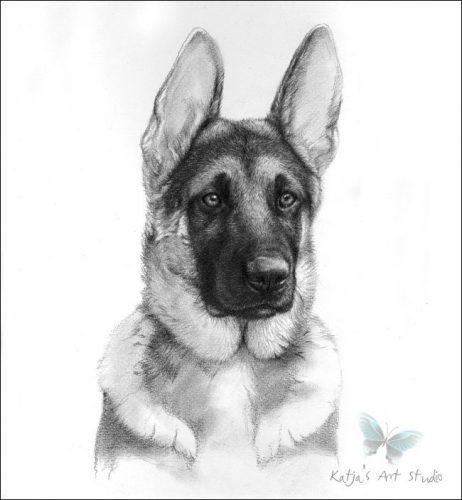 рисунок собаки карандашом3