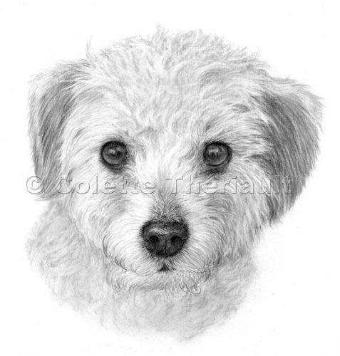 рисунок собаки карандашом4