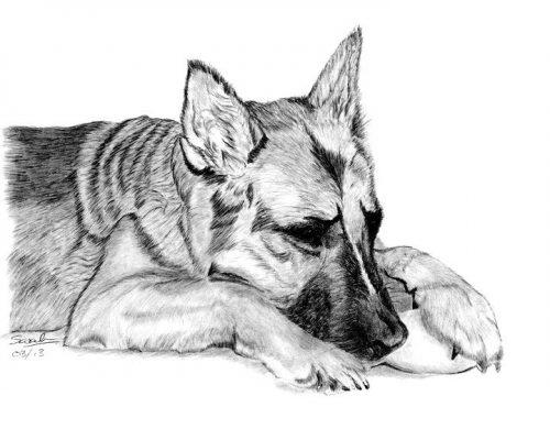 рисунок собаки карандашом5