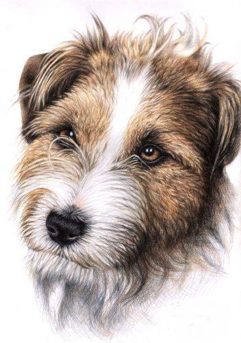 рисунок собаки карандашом6