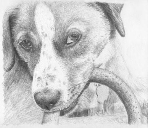 рисунок собаки карандашом7