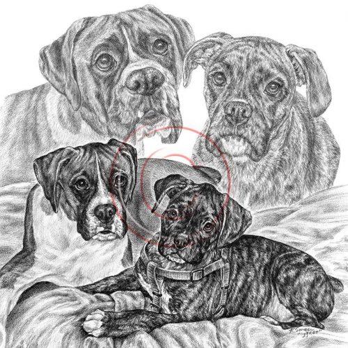 рисунок собаки карандашом8