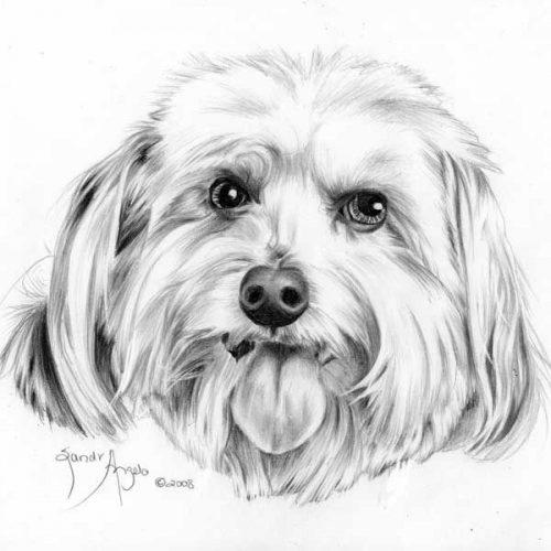 рисунок собаки карандашом9