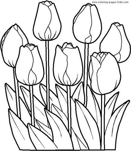 цветы раскраска10