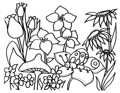 цветы раскраска11