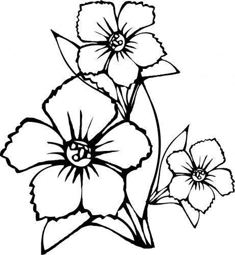 цветы раскраска3