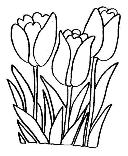 цветы раскраска4