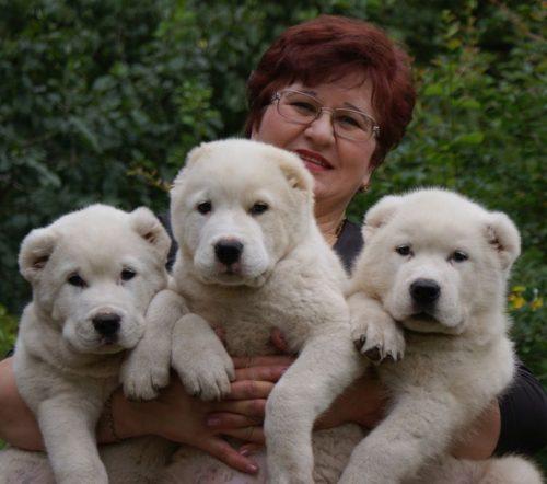 картинки собаки алабай