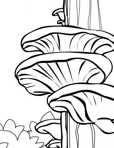 гриб раскраска11