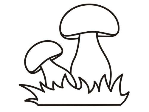гриб раскраска8