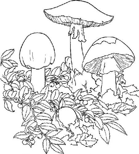 гриб раскраска10