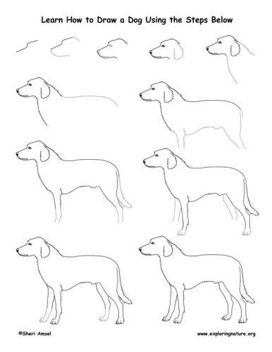 собака как нарисовать3