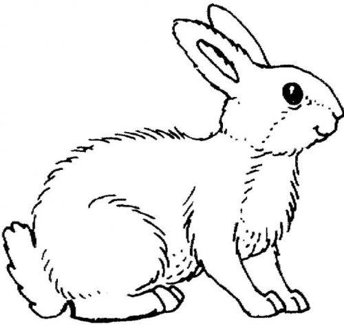 животные раскраска12