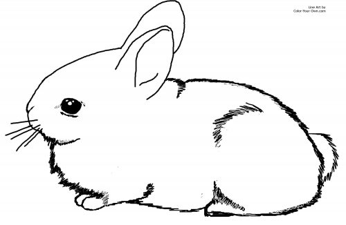 животные раскраска14