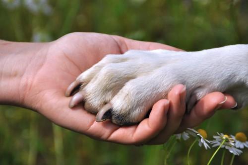 собака друг человека картинки