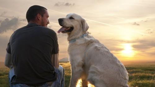собака друг человека картинки2