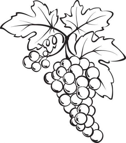 виноград раскраска3
