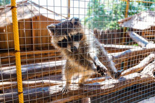 Джунгли контактный зоопарк2