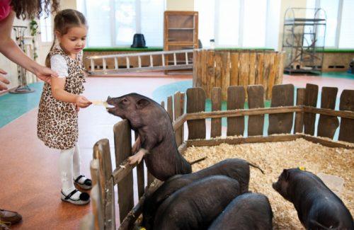 Лесное посольство контаный зоопарк
