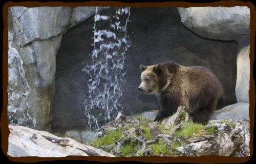 бурый медведь картинка для детей