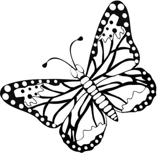 бабочки раскраски3