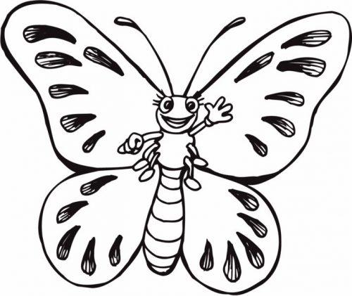 бабочки раскраски7