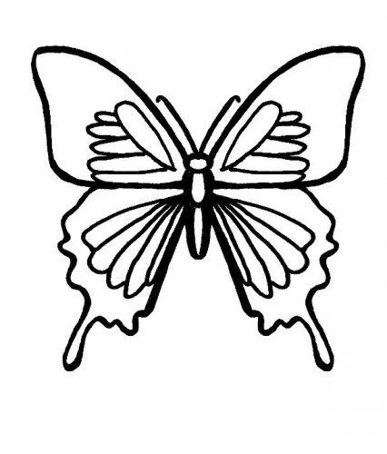 бабочки раскраски5