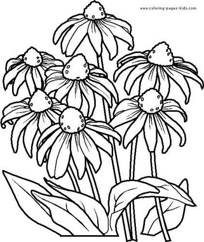 цветы разукрашка6