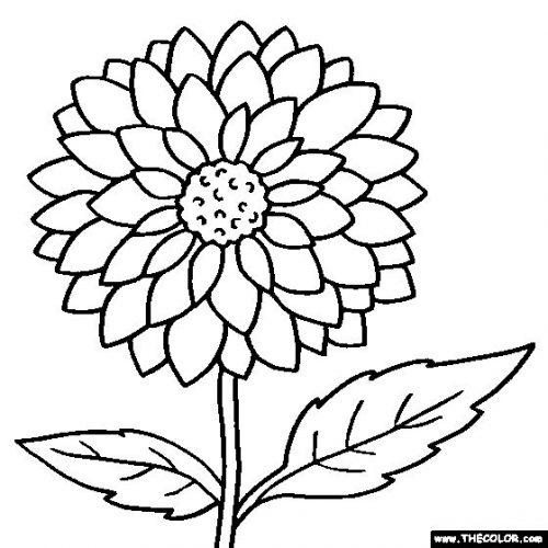 цветы разукрашка7