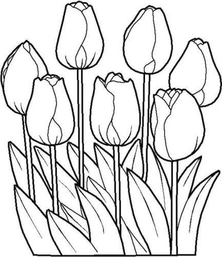 раскраска цветы5