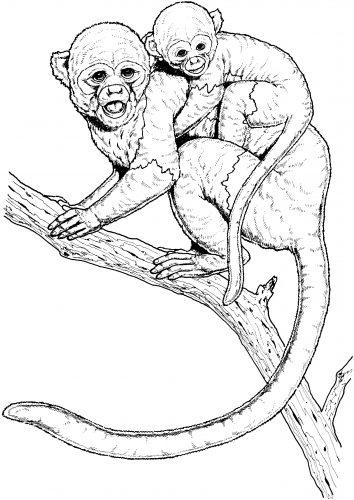 раскраска обезьяна13