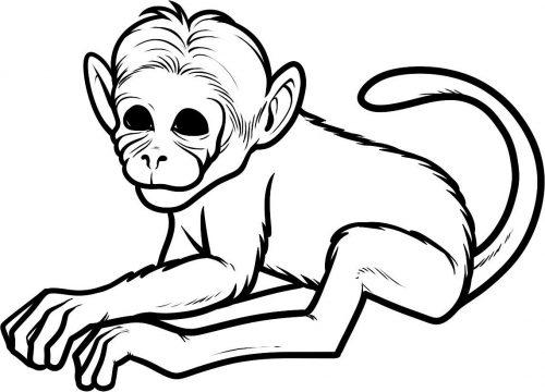 раскраска обезьяна17