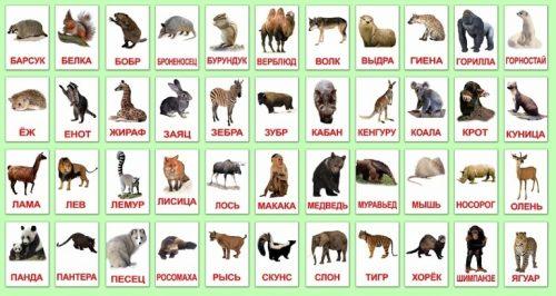 дикие животные картинки для детей