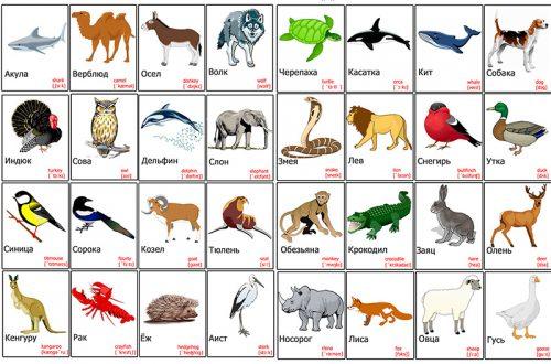 дикие животные картинки для детей2