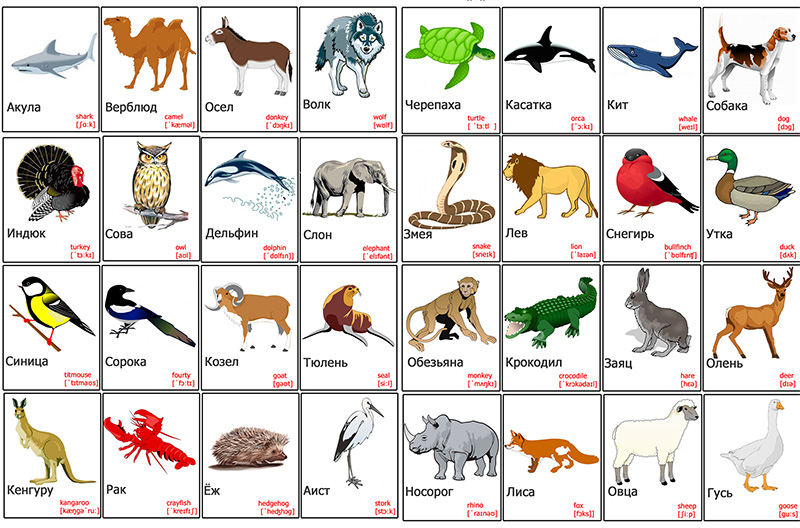 Распечатать картинки животных для английского