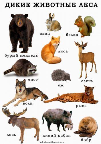 дикие животные картинки для детей3