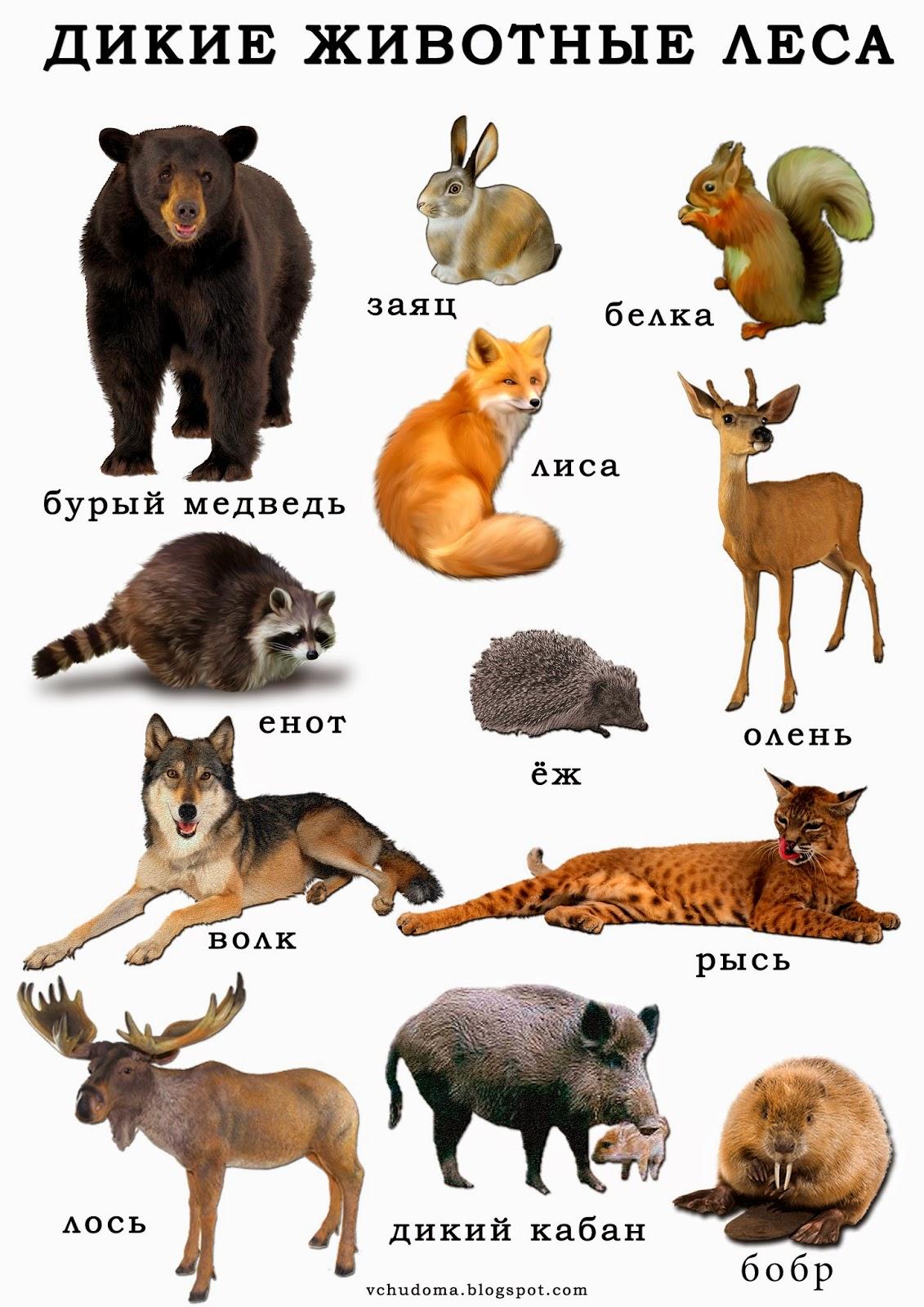 елка название всех животных в лесу с картинками против крепкого льда