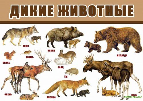 Ясли диких животных